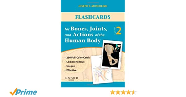 Musculoskeletal Anatomy Coloring Book By Joseph E Muscolino : Flashcards for bones joints and actions of the human body 1st