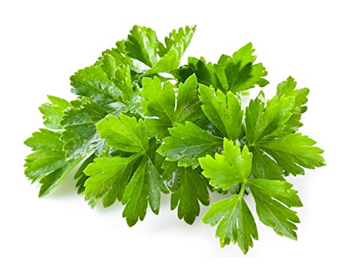 HOT sale! 1000 Healthy Cilantro Herb Seeds High Yield Fruitful vegetable seeds garden bonsai - To Get How Gold Minecraft