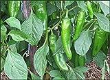 anaheim chili - 30+ Anaheim Chili Pepper Seeds