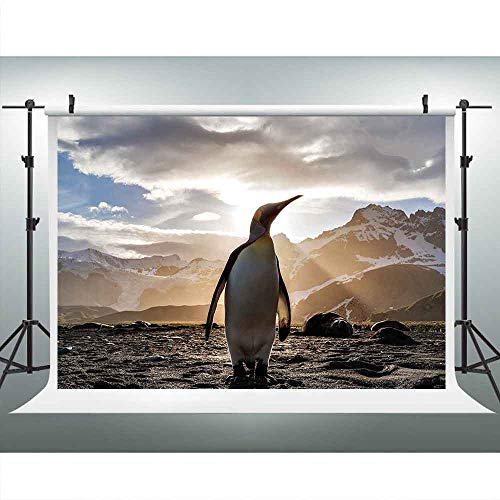 (LUCKSTY 9x6ft Proud Penguin in Sunshine Photography Backdrop Southern Iceland Animal Background Studio Props LUP348)