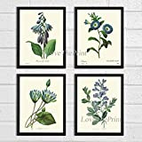Botanical Print Set of 4 Prints Unframed Antique Blue Daylily Morning Glory Bindweed Water Lily Wild Indigo Flowers Wildflowers Home Room Decor Wall Art