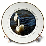 3dRose WhiteOaks Photography and Artwork - Ducks - Mirror Mirror is a photo of two ducks looking at each other - 8 inch Porcelain Plate (cp_265328_1)