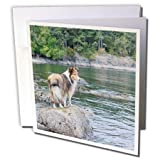 Danita Delimont - Canada - British Columbia, Portland Island. Sheltie on rocks at Arbutus Point - 6 Greeting Cards with envelopes (gc_226866_1) offers