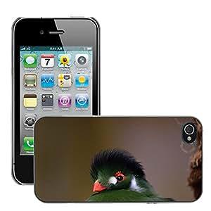 Etui Housse Coque de Protection Cover Rigide pour // M00108380 Verde cresta Turaco exótico pájaro // Apple iPhone 4 4S 4G