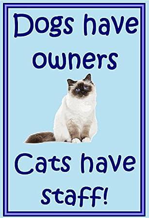 Birman Gato - Novedad Gato imanes de nevera - los perros tienen propietarios - Regalos para dueños de gatos: Amazon.es: Hogar