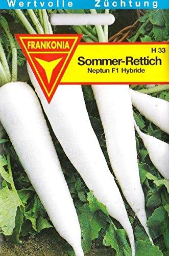 Sommer Rettich, widerstandsfähig gegen Rettichschwärze, ca. 45 Samen