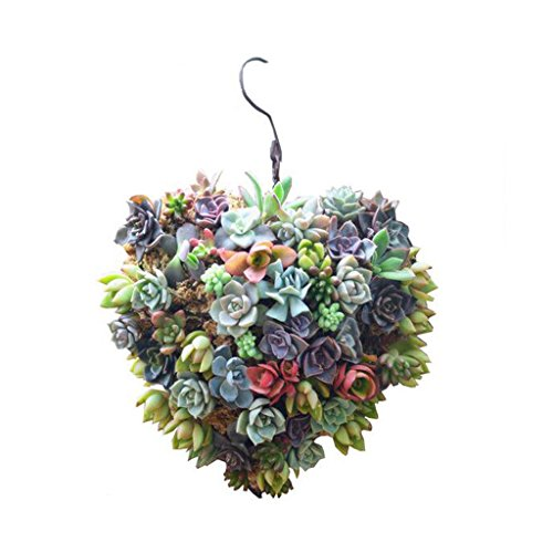 (Iron Wire Heart Succulent Pot Herb Flower Planter DIY Decor 14cm)