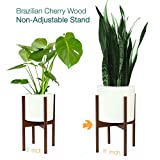 Fox & Fern Mid-Century Modern Plant Stand - Cherry - EXCLUDING 11'' White Ceramic Planter Pot