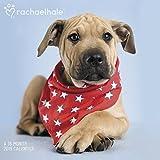 Rachael Hale Dogs Wall Calendar (2019)