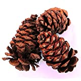 Large Apple Cinnamon Pine Cones - Pack of 4