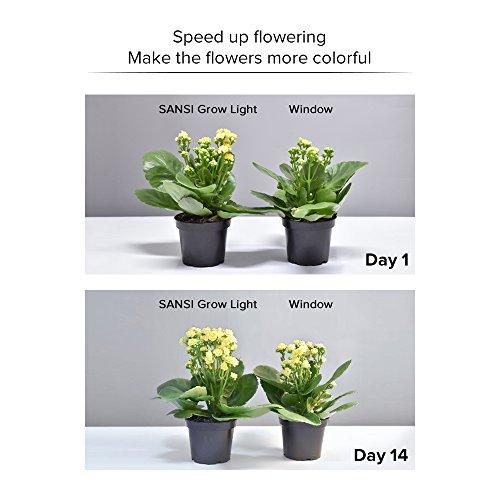 SANSI Flowering LED Grow Light Bulb, Ceramic Plant Light, HydroponiGrowing Light Bulbscs, Indoor Farming, Greenhouses (15w, E26 Socket, 16 LED Chips) by SANSI (Image #5)