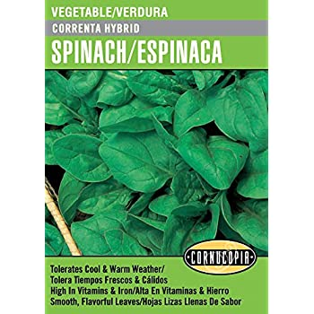 Correnta Hybrid Spinach/Espinaca - Spanish/English