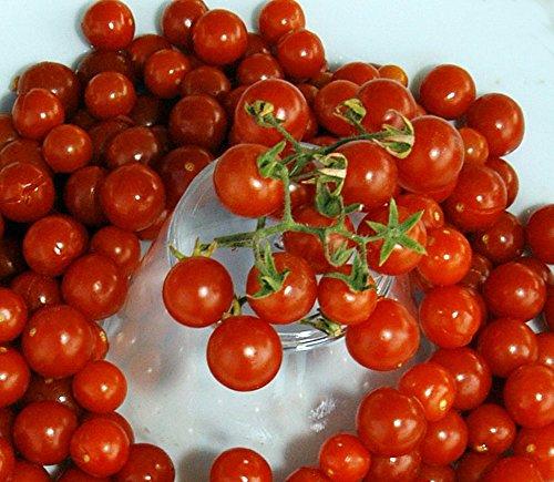 (Red Currant Tomato 30 Seeds - Heirloom -Tart/Sweet)