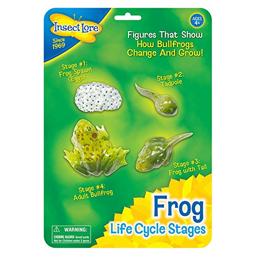 Insect Lore Frog Life Cycle Stages ()