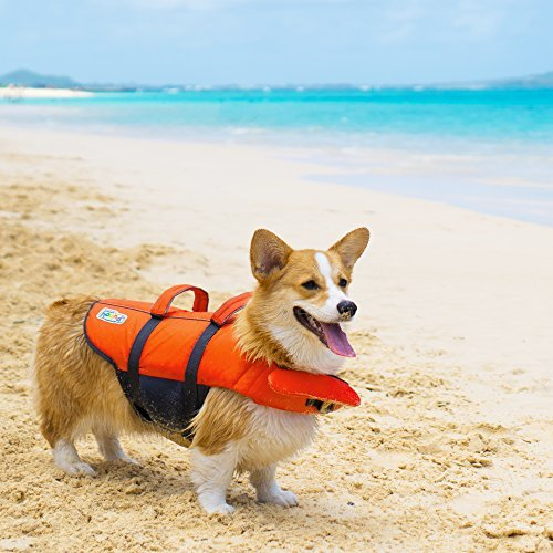 Outward Hound Medium Dog Life Jacket, Granby Splash