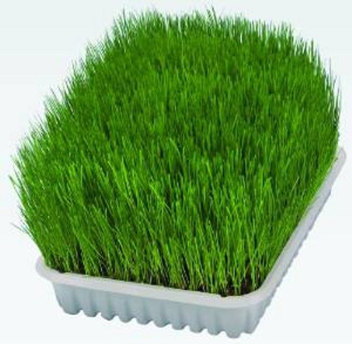 Trixie Grow Your Own Cat Grass 50g 100g Option Of Growing Tray 50g Seed Pack Buy Online In Cambodia Trixie Products In Cambodia See Prices Reviews And Free Delivery Over 27 000 Desertcart
