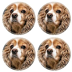 MSD Natural Round Drink Coaster set of 4 Image ID: 37531026 beautiful American Cocker Spaniel close up 6