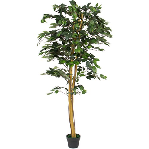 Ficus Tree (Best Choice Products 6 FT Decorative Artificial Tree Ficus Plant)