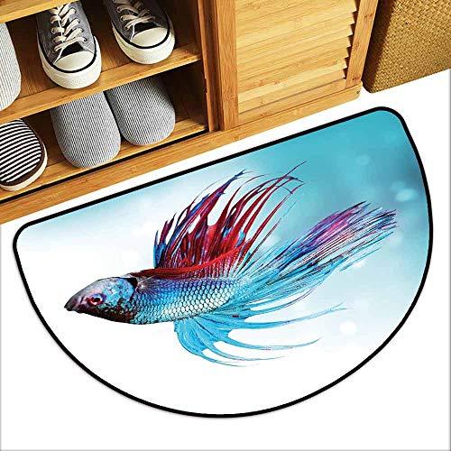 - DILITECK Interior Door mat Aquarium Siamese Fighting Betta Fish Swimming in Aquarium Aggressive Sea Animal Quick and Easy to Clean W36 xL24 Sky Blue Dark Coral