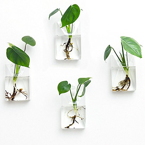 Mkono 2 Pack Wall Hanging Plant Terrarium Glass Planter, Rectangle by Mkono (Image #1)