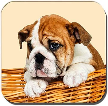 Compra Cushions Corner Bulldog Inglés Cachorro Posavasos ...