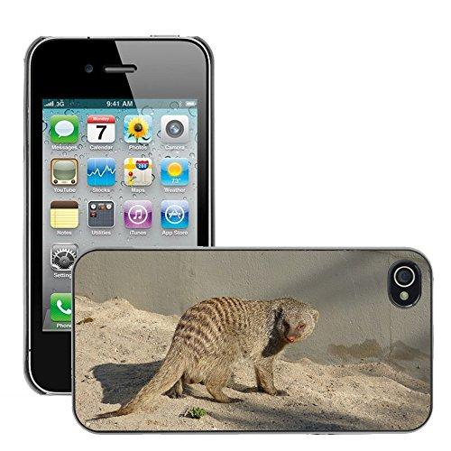 Bild Hart Handy Schwarz Schutz Case Cover Schale Etui // M00134433 Tier Säugetier Civets Mongoose // Apple iPhone 4 4S 4G