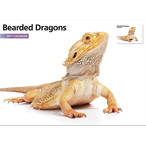 Magnet & Steel 2017 Bearded Dragon Reptile Calendar, A4 Wall Calendar