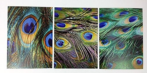 Box Set Triple Design Greeting Cards PEACOCK FEATHERS (Blank Message)