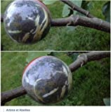 CUTTING GLOBE 6 medium for your trees and shrubs Air layering made easy Grow Roots on Plant Cuttings in as few as 8 weeks - Propagate Trees, Shrubs, Roses, Climbers & More