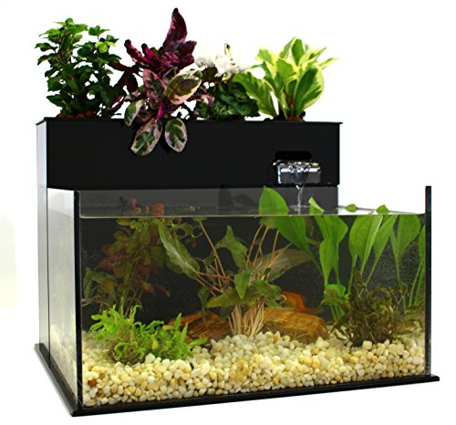Fin to Flower Aquaponics Aquarium