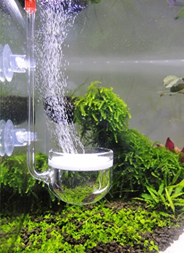 Music Glass CO2 Diffuser for Aquarium Plant (1.6'' for 50 - 70 gallons tank)