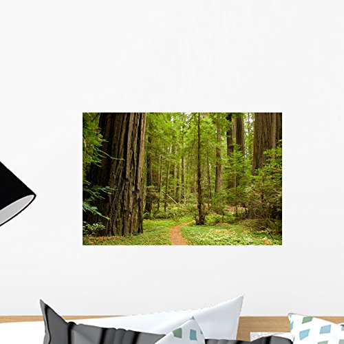 Wallmonkeys WM223909 Path Through The Redwood Forest Wall Decal Peel and Stick Graphic (18 in W x 12 in H)