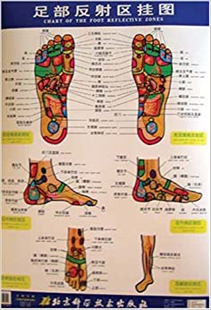 Chart of the Foot Reflective Zones (English & Chinese Edition ...
