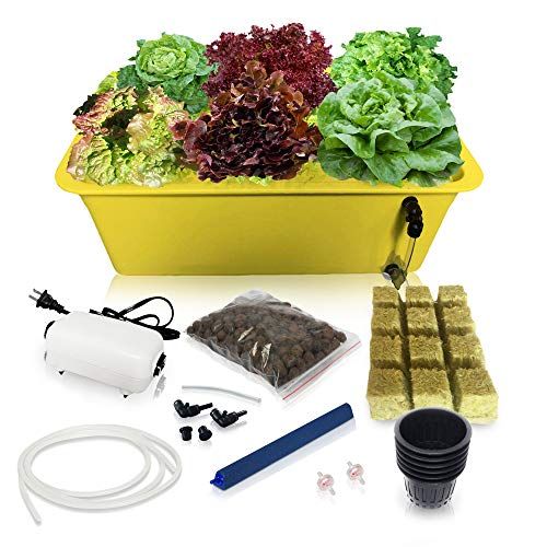 DWC Hydroponic System Growing Kit - Large Airstone, Rockwool, 6 Site (Holes) Bucket with Air Pump - Complete Hydroponics Indoor Herb Garden Starter Kit for Kitchen - Grow Super Fast (6 Sites)