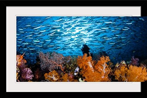 greatBIGcanvas Indonesia, Komodo, Divers and A School of Fusiliers and Alcyonarians by Dave Fleetham Photographic Print with Black Frame, 36'' x 24'' by greatBIGcanvas