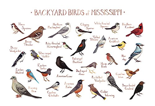 Backyard Birds of Mississippi Field Guide Art Print