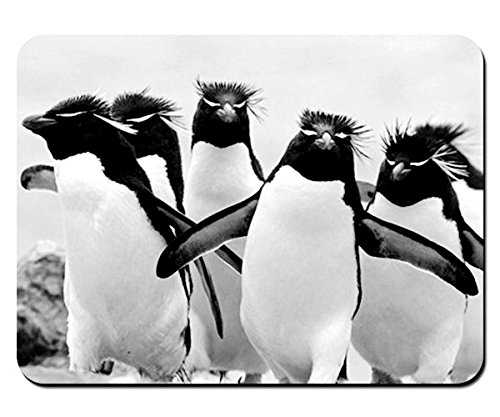 penguins falkland islands south atlantic Animal - Mouse Pad - 8.6