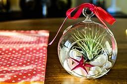 Hinterland Trading Mother\'s Day Gift Air Plant Tillandsia Pink Starfish Seashell Glass Hanging Terrarium Kit Beautiful Houseplant