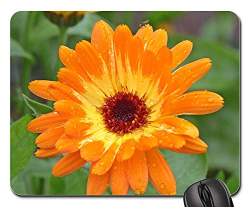 - Mouse Pad - Marigold Calendula Blossom Bloom Bi Color