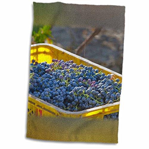 3drose-danita-delimont-grapes-cabernet-sauvignon-grapes-from-a-vineyard-china-12x18-towel-twl-208794