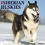 Just Siberian Huskies 2020 Wall Calendar