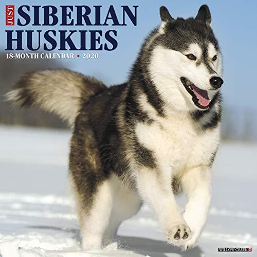 (Just Siberian Huskies 2020 Wall Calendar (Dog Breed Calendar))