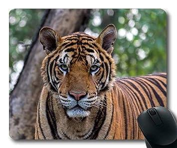 Alfombrillas de ráton Animales, Gato Grande de la fotografía ...