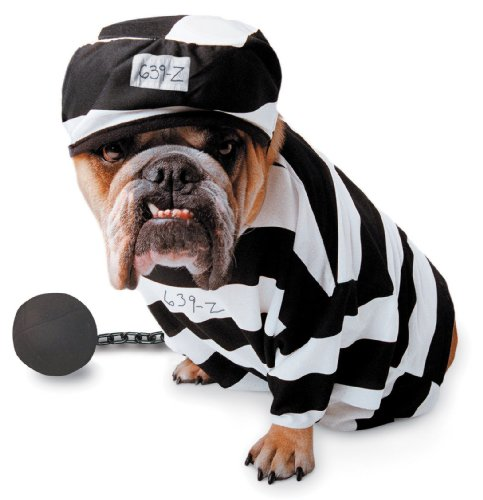 Paper Magic Group PM6858006-L Zelda Prisoner Pet Costume Size Large by Paper Magic
