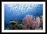 GreatBIGCanvas ''Coral reef, Indonesia, Raja Ampat'' Photographic Print with Black Frame, 36'' x 24''