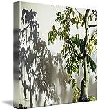 Wall Art Print entitled Bonsai Shadows Morikami Gardens by Ginette Callaway offers