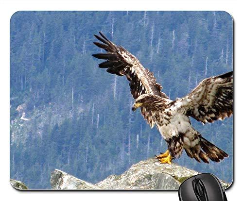 (Mouse Pad - Eagle Bald Juvenile Young Bird Nature)