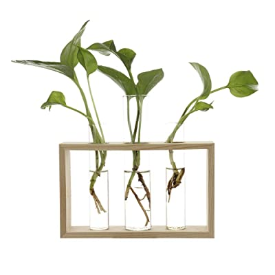 Water Planting Glass Vase,Test Tube Planter Modern Flower with Retro Solid Wooden Stand Tabletop for Hydroponics Plants Home Garden: Home & Kitchen