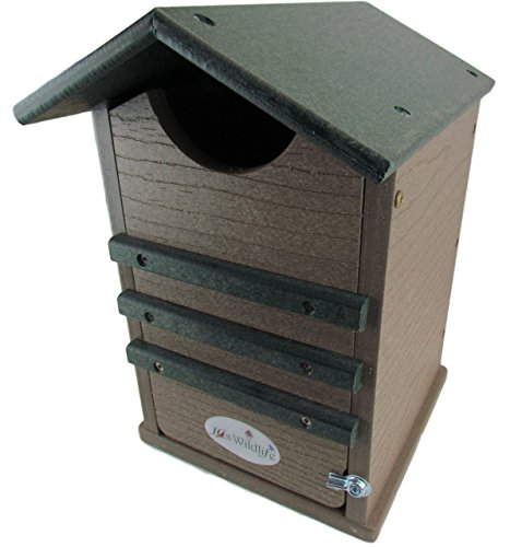 JCs Wildlife Ultimate Poly Screech Owl/Saw-Whet Owl House (Green/Tan)