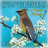 Songbirds of North America 2020 Calendar